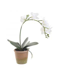 Λουλούδι Σε Γλάστρα - 3-85-246-0199