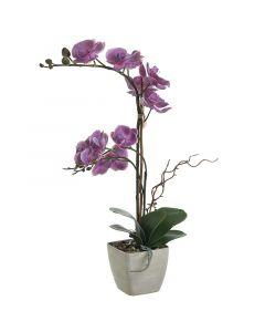 Λουλούδι Σε Γλάστρα - 3-85-246-0214